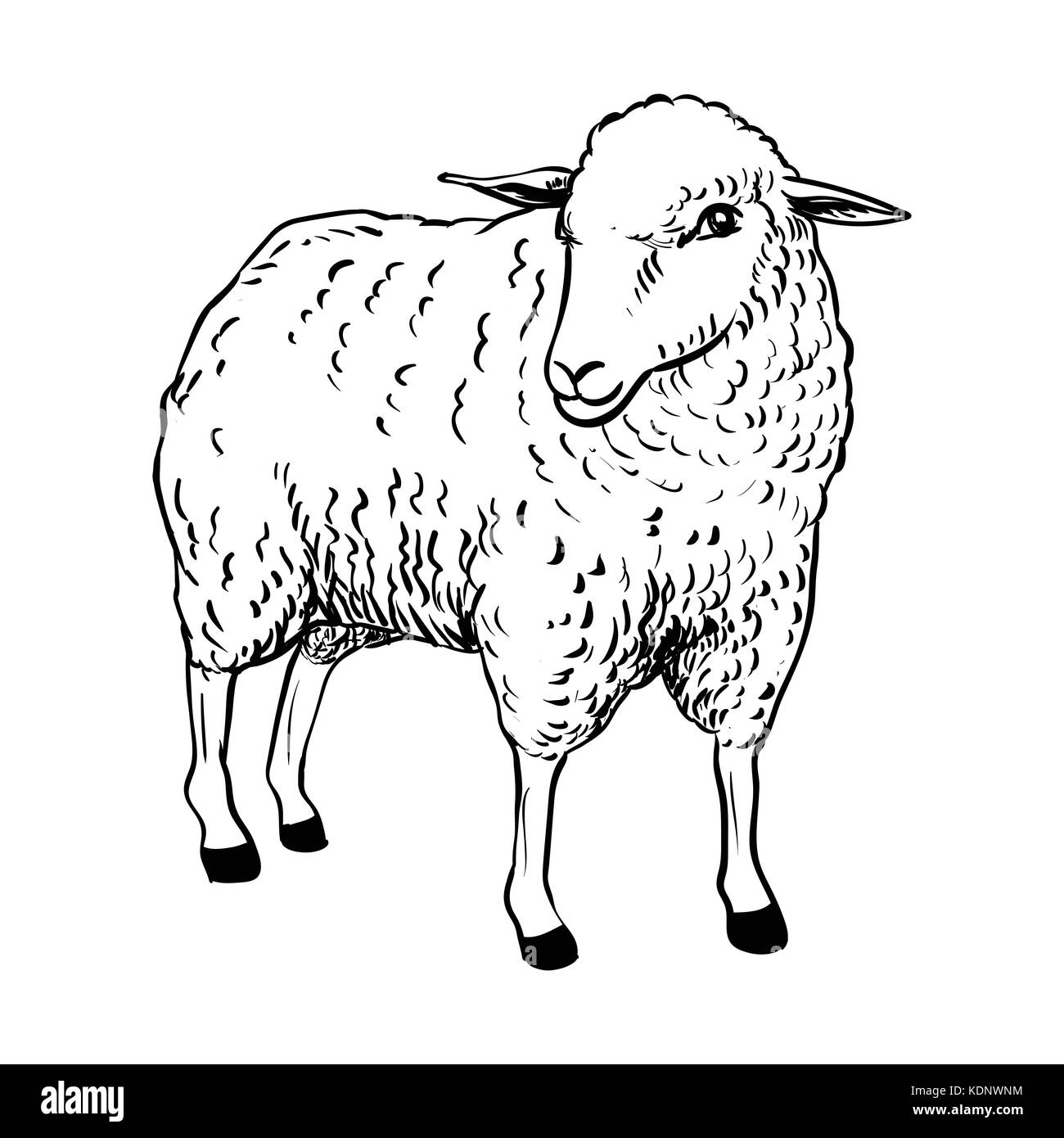 Hand drawing of Cartoon Sheep, Sketch design for coloring book.Vector Illustration. - Vector Illustration - Stock Vector