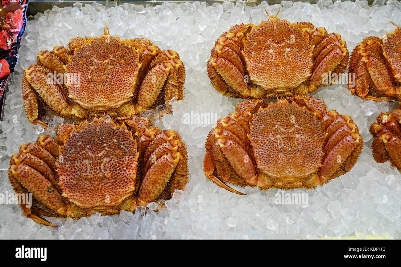 King crabs at Asaichi Market in the city of Hakodate, Hokkaido, Japan. - Stock Image