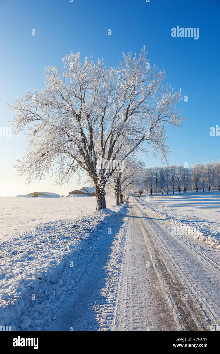 Slippery winter road with a tree line in the countryside - Stock Image