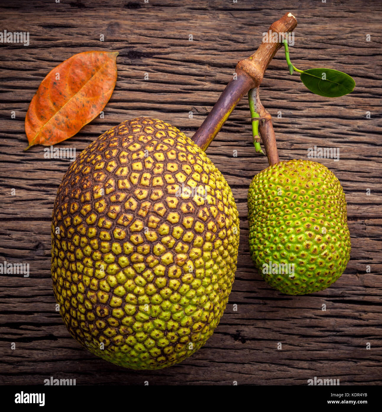 Sweet Jack fruit on shabby wooden background .Tropical fruit  sweet and aromatic flesh of a ripe jack fruit ('Artocarpus - Stock Image