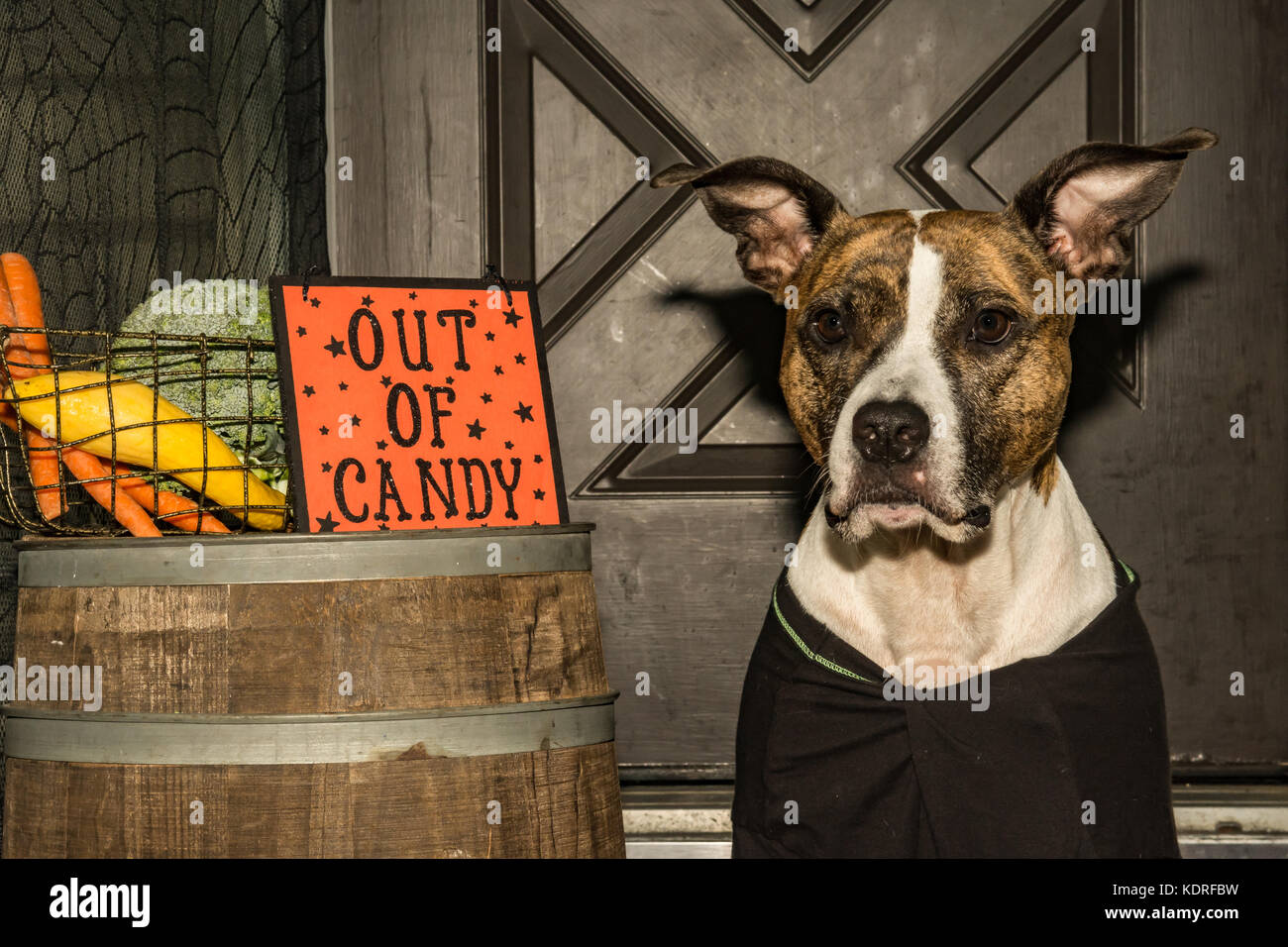 Out of Halloween Candy - Stock Image