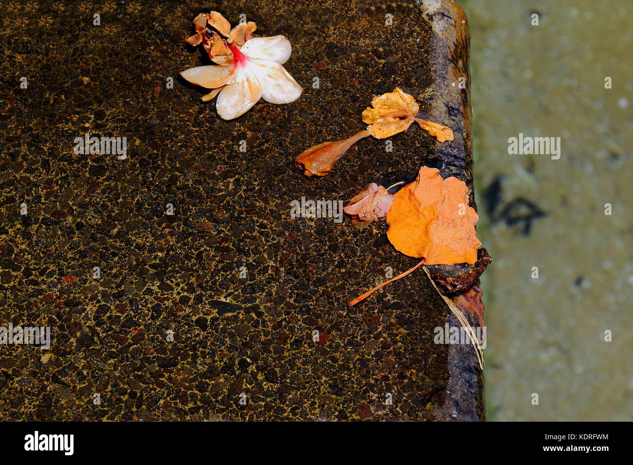 Flower petals in a stream just about to fall over the edge of an ornamental waterfall in landscape format with copy - Stock Image