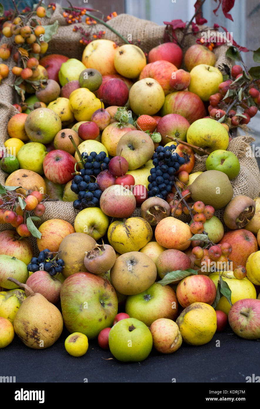 Image result for hill close gardens apple day