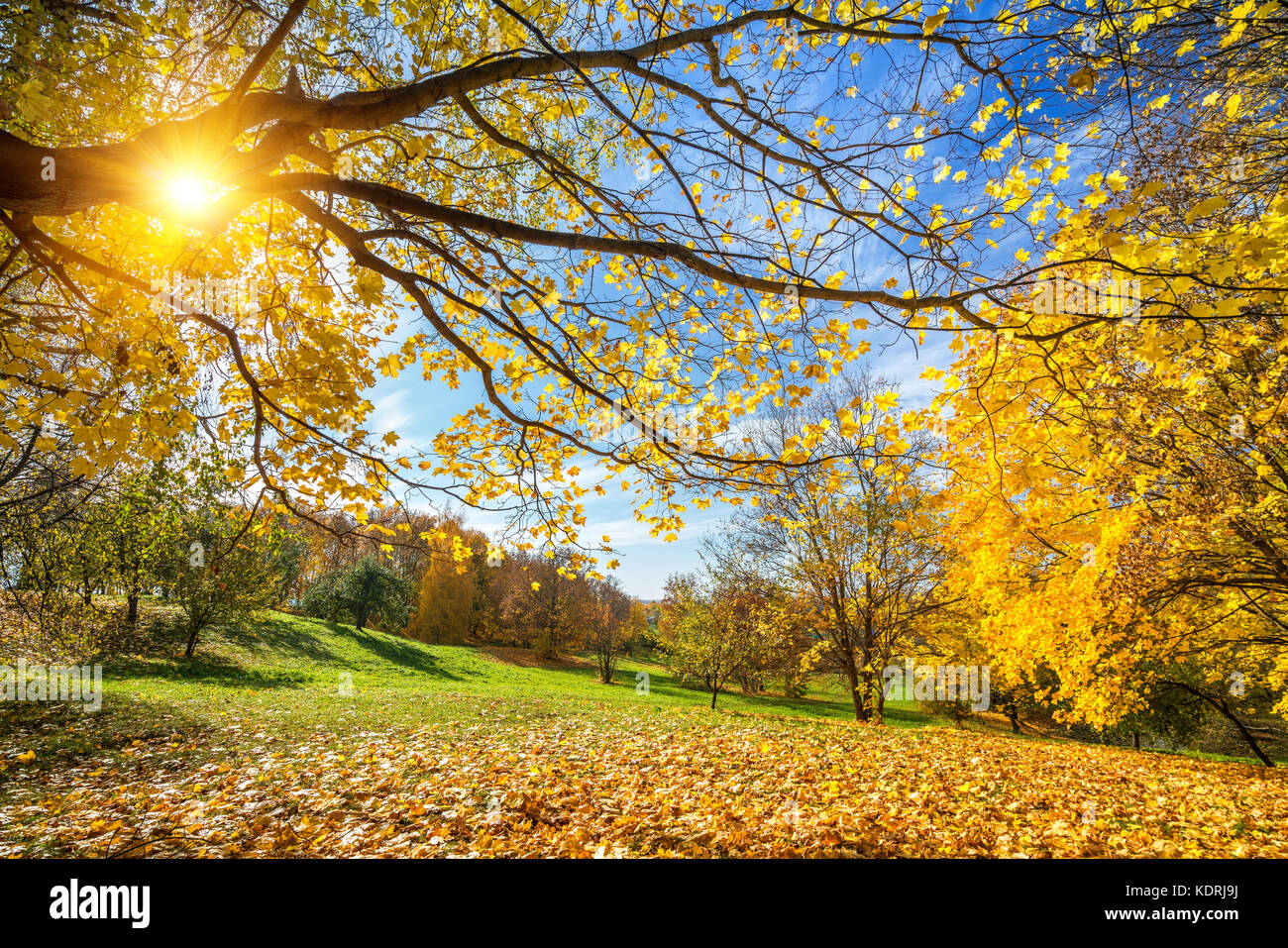 Sunny autumn in countryside - Stock Image