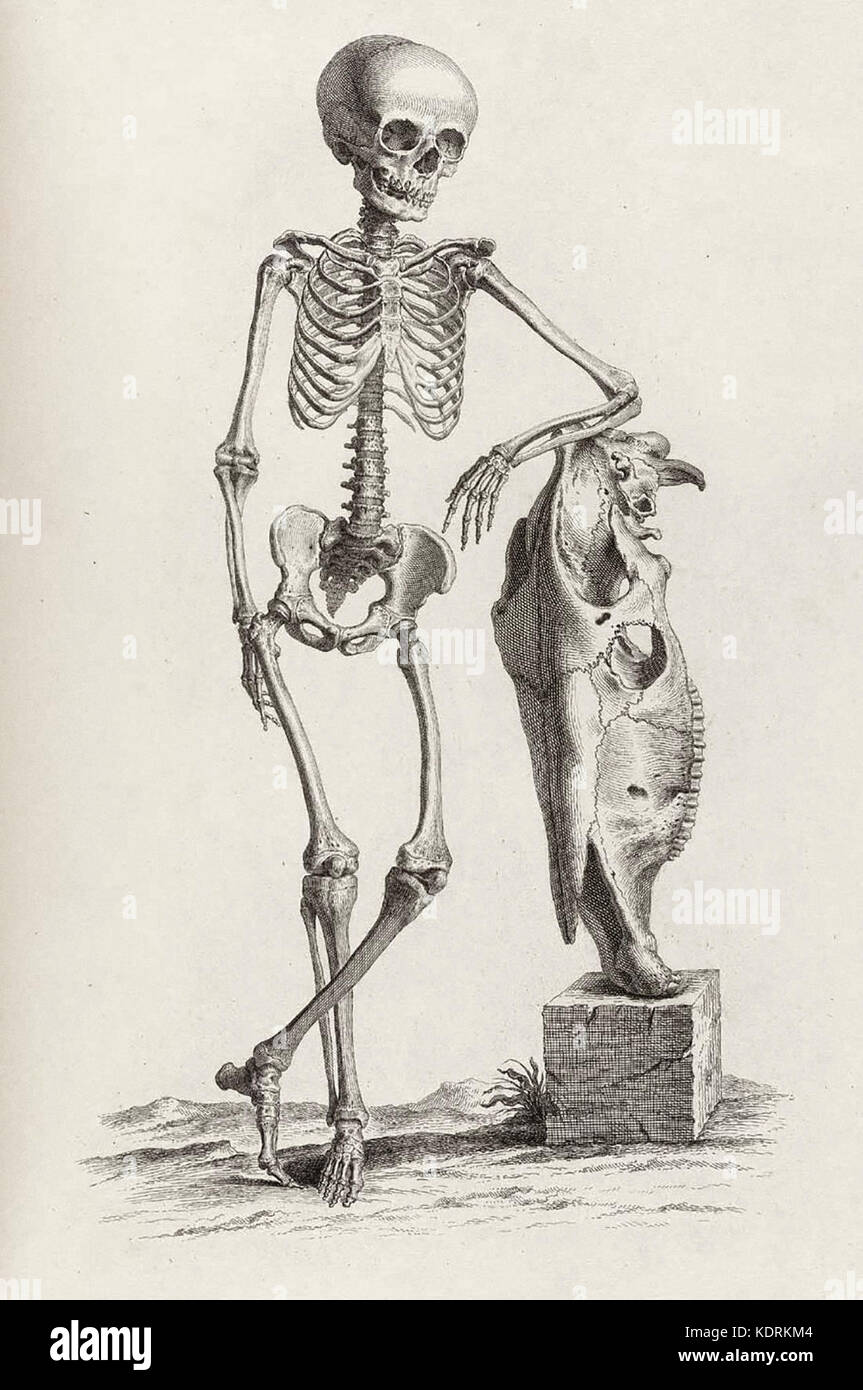 A Skeleton of a man leaning on what appears to be the skeleton of a fish - Stock Image