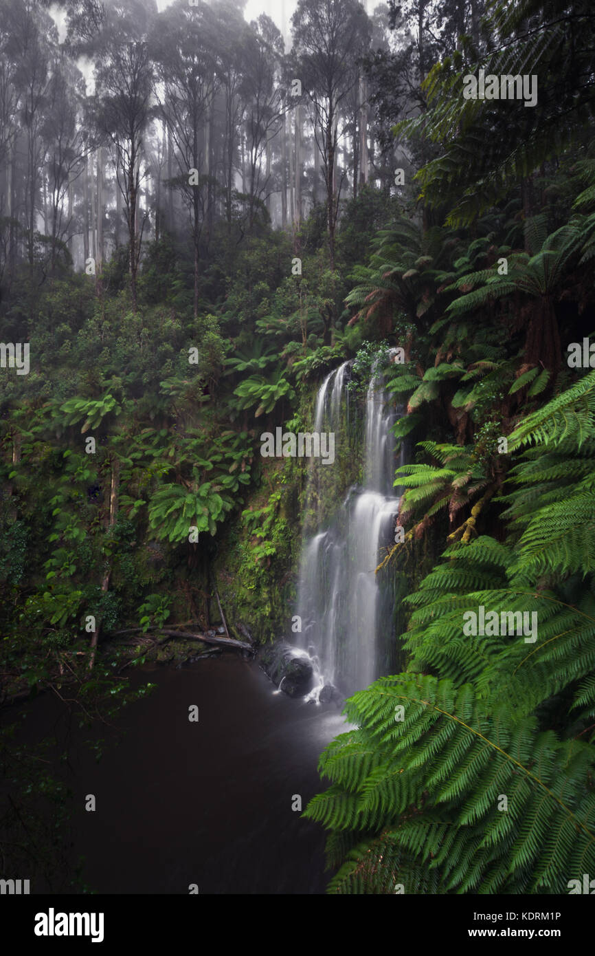 Dramatic Beauchamp waterfall in the lush otways national park along the great ocean road in Australia. Waterfall - Stock Image