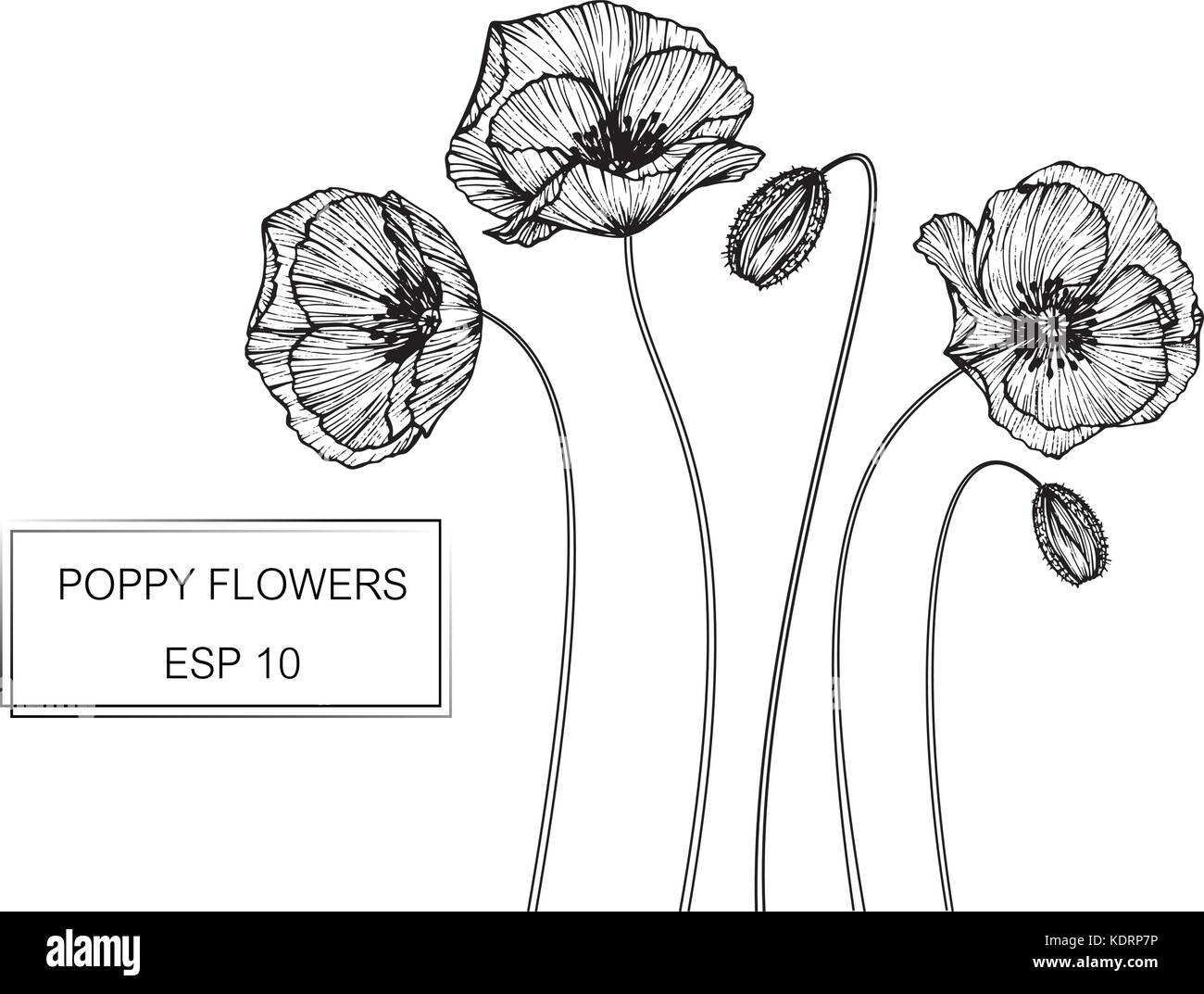Poppy flower drawing illustration black and white with line art poppy flower drawing illustration black and white with line art mightylinksfo