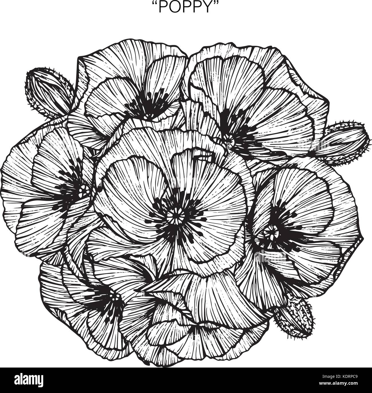 Bouquet Of Poppy Flowers Drawing Stock Vector Art Illustration