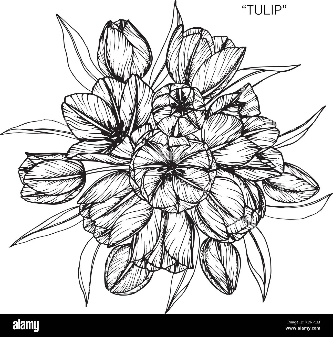 Bouquet of tulip flowers drawing illustration black and white with line art