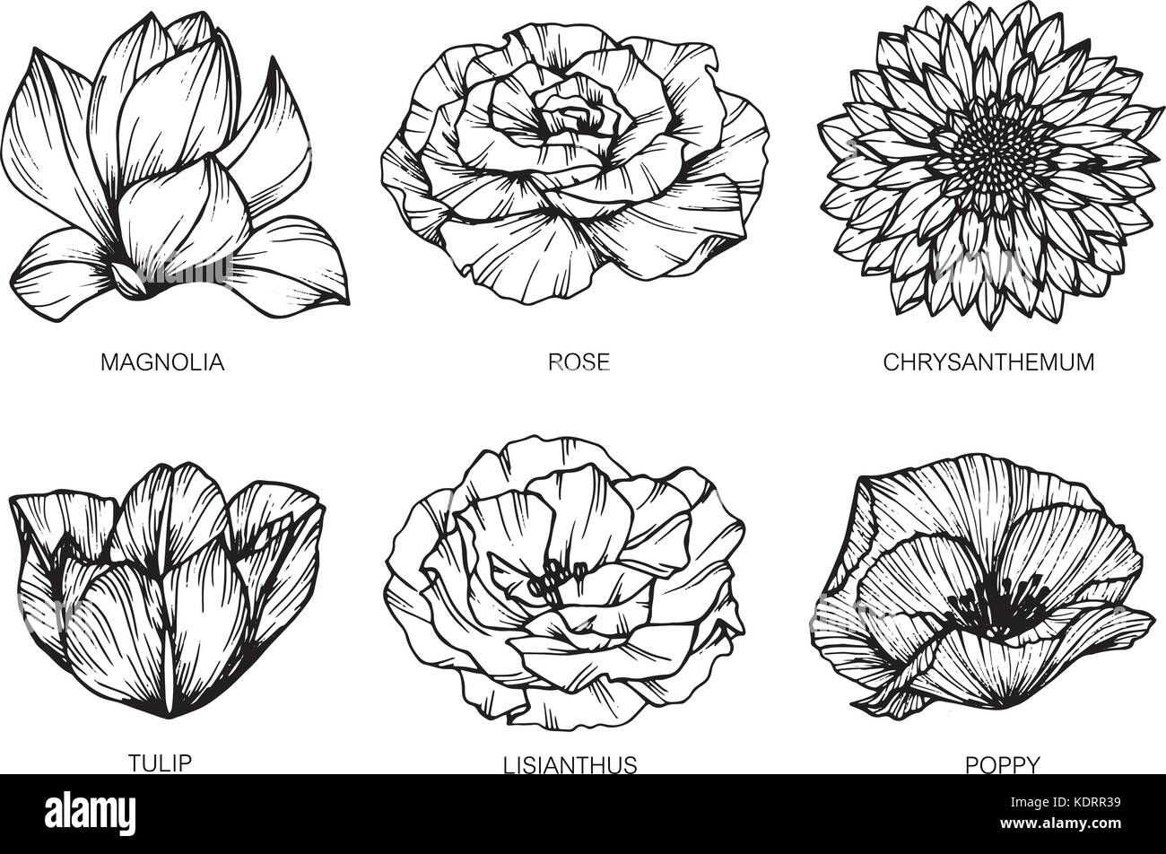 Collection Of Flowers Drawing And Sketch With Line Art On White