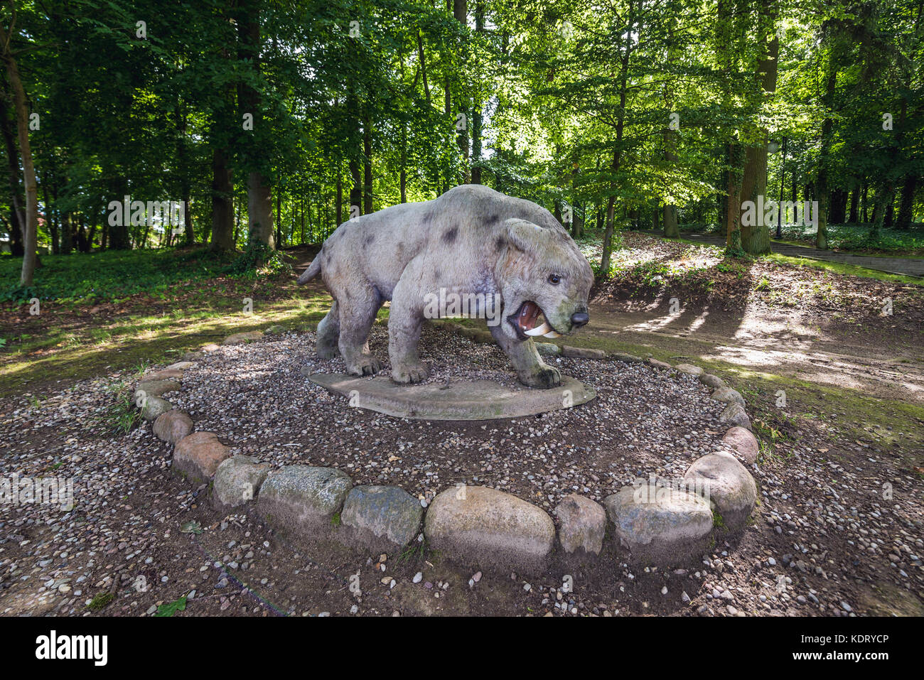 Model of extinct specie of Saber-toothed cat in geopark called 'Avenue of Pleistocene Stars' in Moryn town - Stock Image
