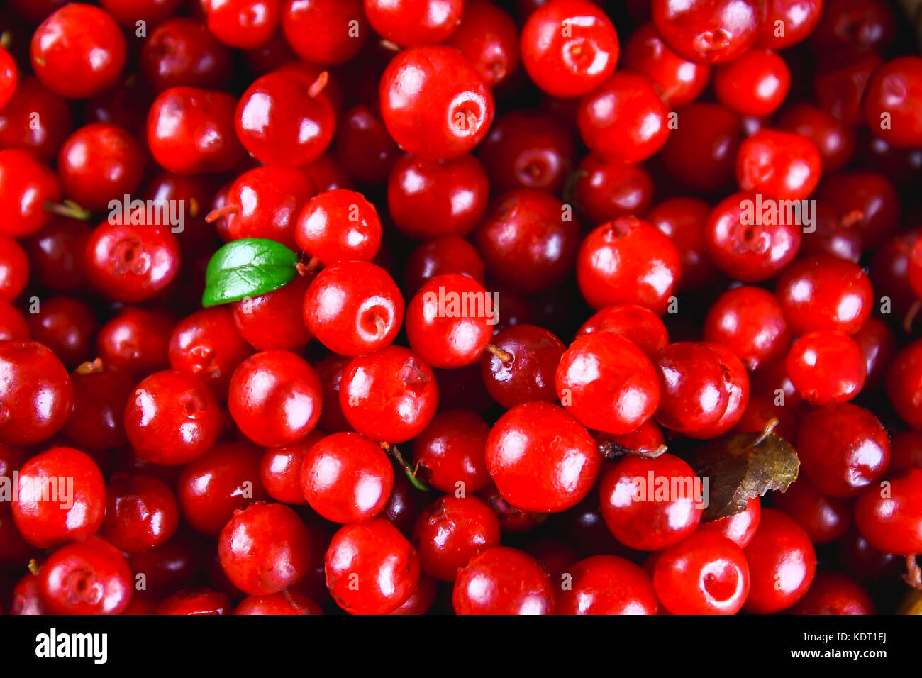 Cowberry, foxberry, cranberry, lingonberry texture, top view. - Stock Image
