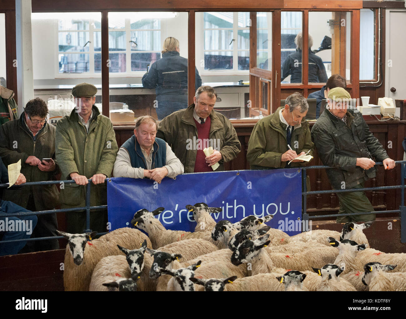 Lazonby Auction Mart, Cumbria, UK. Autumn sale of mule gimmer lambs. Buyers and sellers by the auction ring. - Stock Image