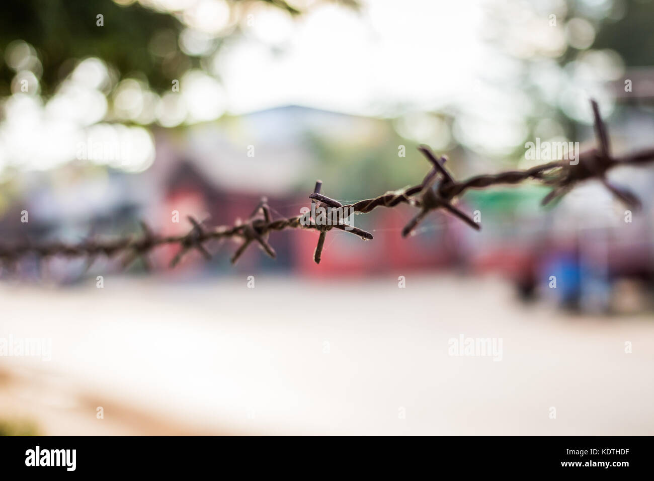 Barbed wire against green background Stock Photo