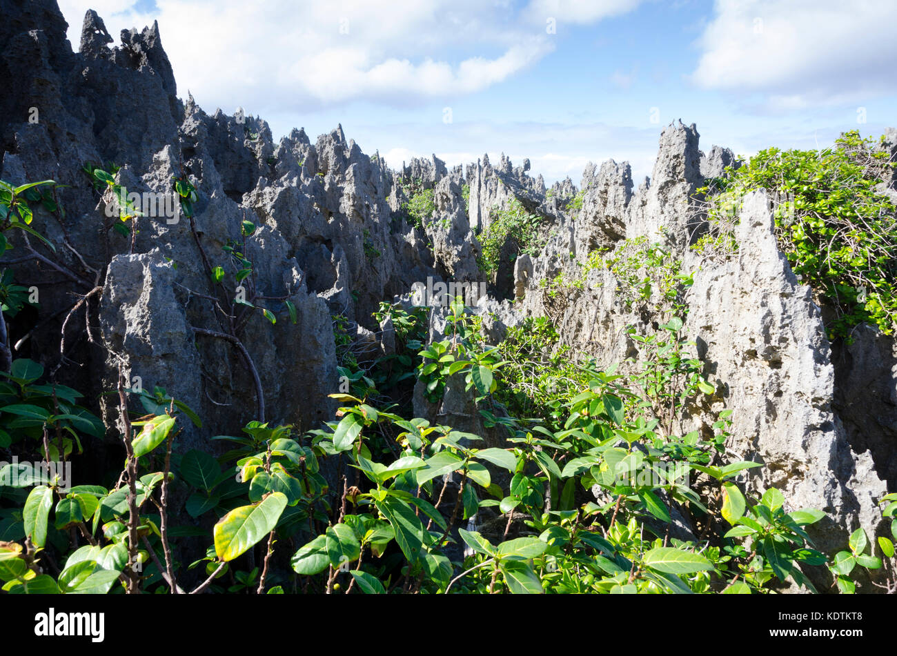 Limestone pinnacles, Togo, Niue, South Pacific - Stock Image