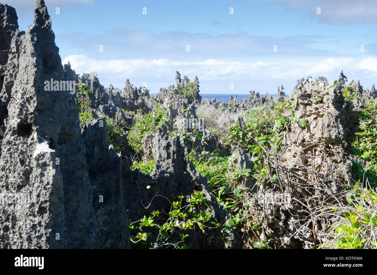 Limestone pinnacles beside sea, Togo, Niue, South Pacific - Stock Image