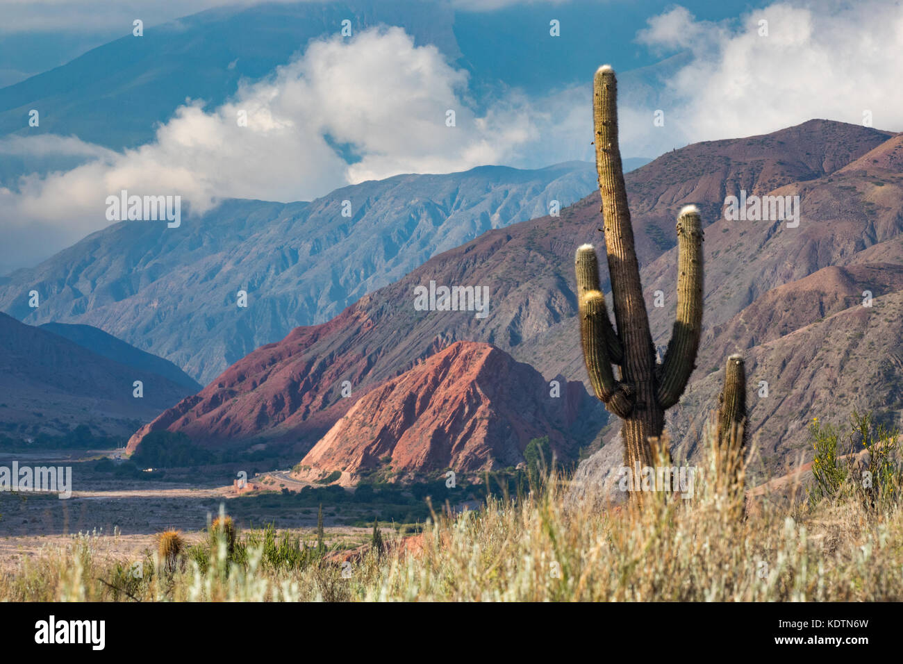 First light on the cactus and hills of  the Quebrada de Humahuacha nr Maimara, Jujuy Province, Argentina - Stock Image