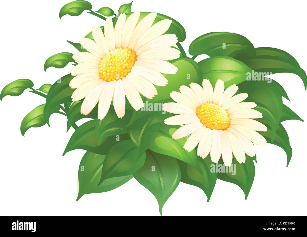 Cartoon daisy flower image cut out stock images pictures alamy white daisy flowers in green bush illustration stock image izmirmasajfo