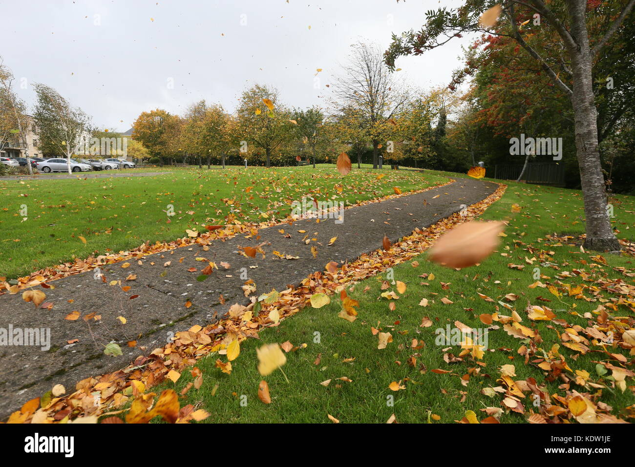 Dublin, Ireland. 12th Oct, 2017. Leaves fly around in green area as Ophelia arrives in Dublin. Image from Dublin, - Stock Image