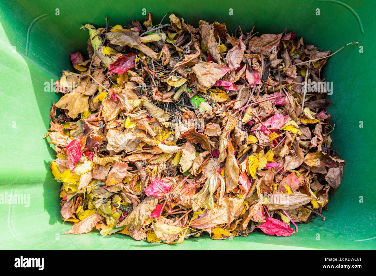 Multi Colored Autumn Leaves inside of Garbage Can, looking down - Stock Image