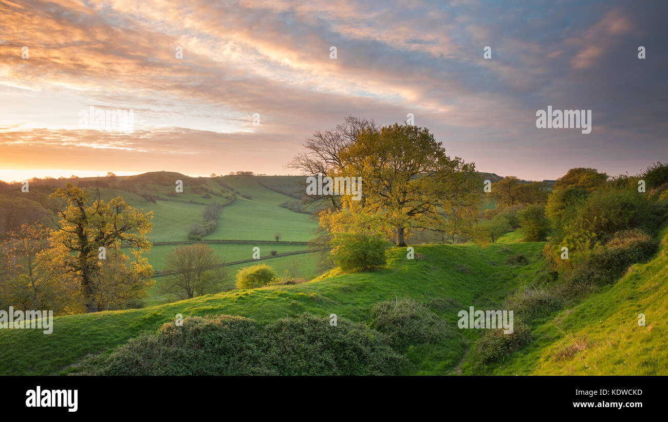 Cadbury Castle, an iron age hill fort, South Somerset, England, UK - Stock Image