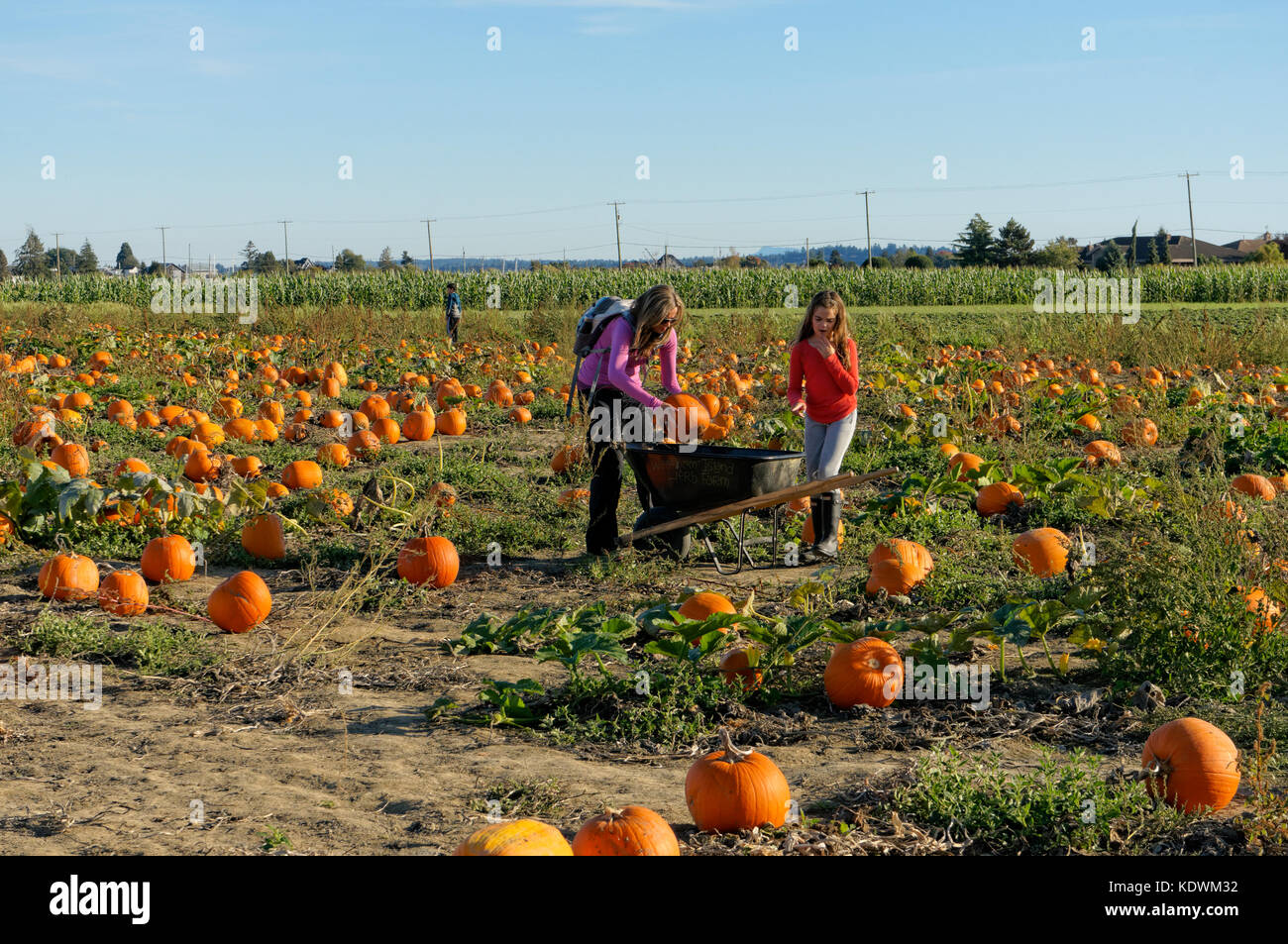 Mother an daughter placing pumpkins in a wheelbarrow at Westham Island Herb Farm, Delta, British Columbia, Canada - Stock Image