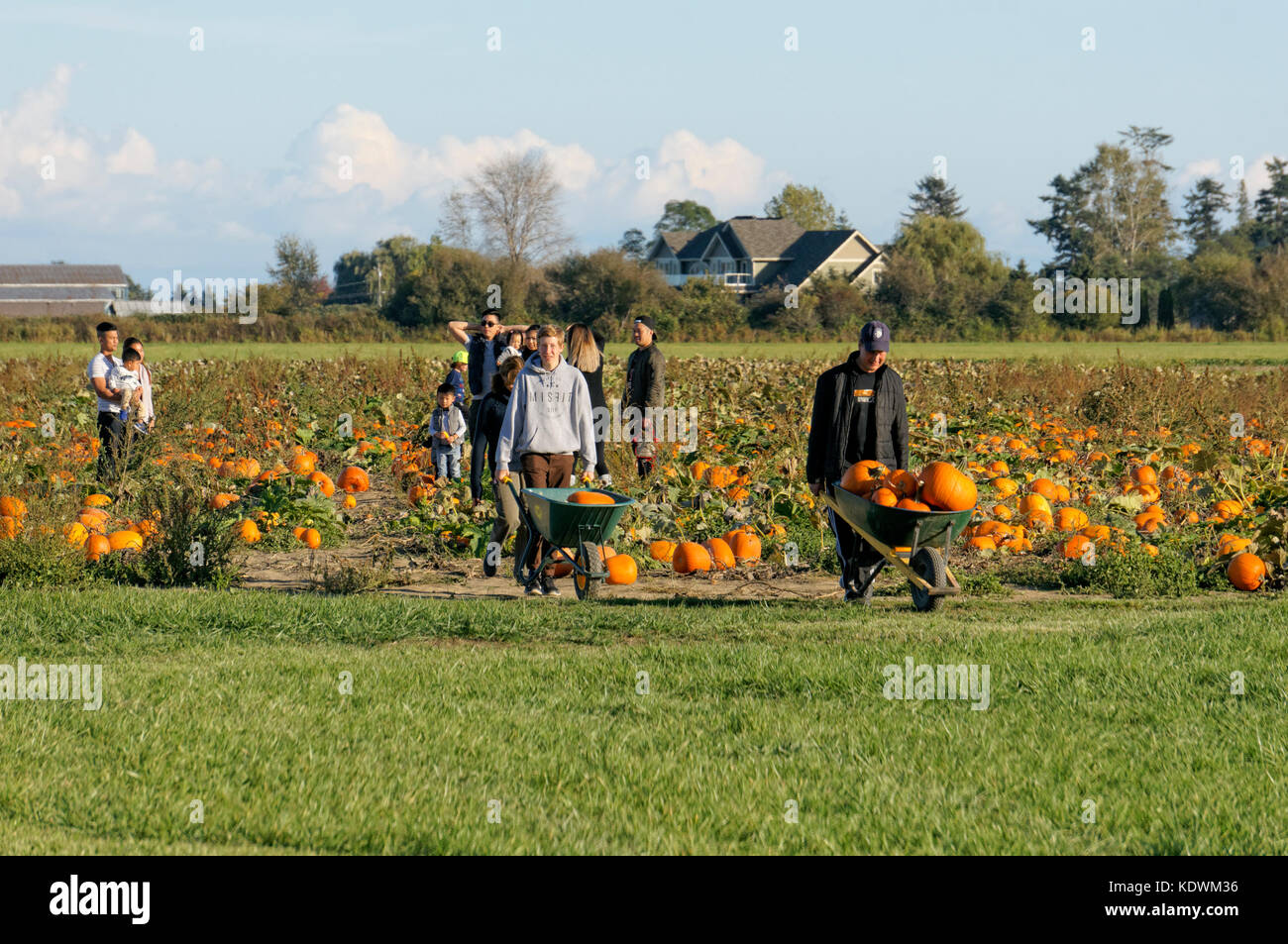 People pushing wheelbarrows full of pumpkins at Westham Island Herb Farm, Delta, British Columbia, Canada - Stock Image