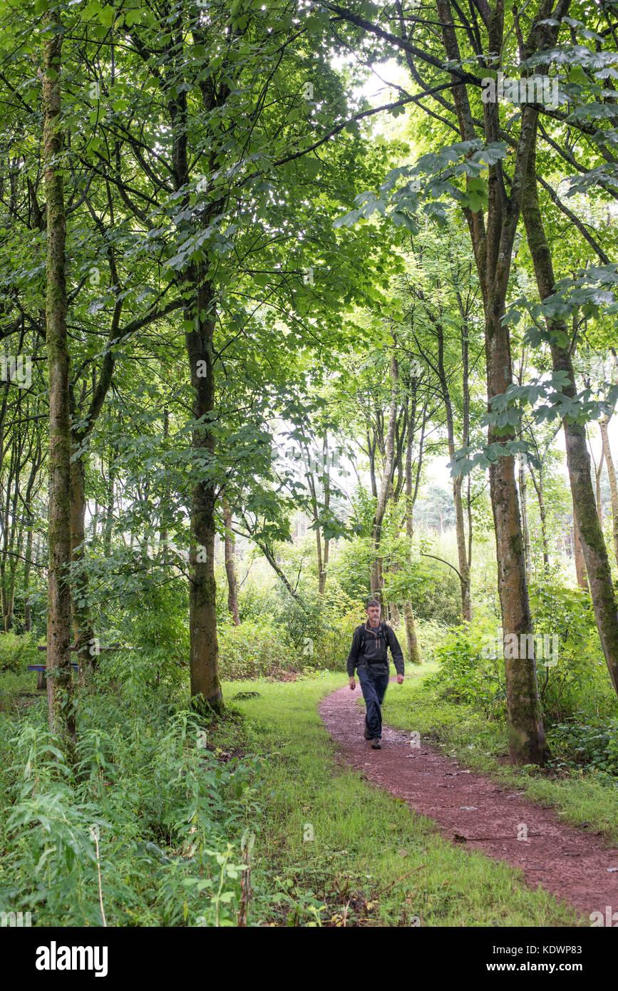 Walking in  North Wood, Livingston, Scotland.  Summer. - Stock Image