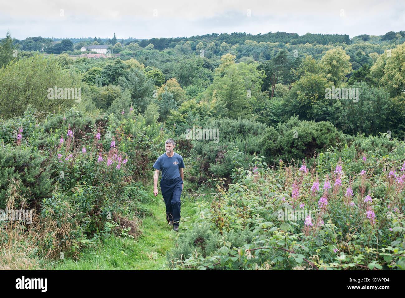 Walker in  North Wood, Livingston, Scotland.  Summer. - Stock Image