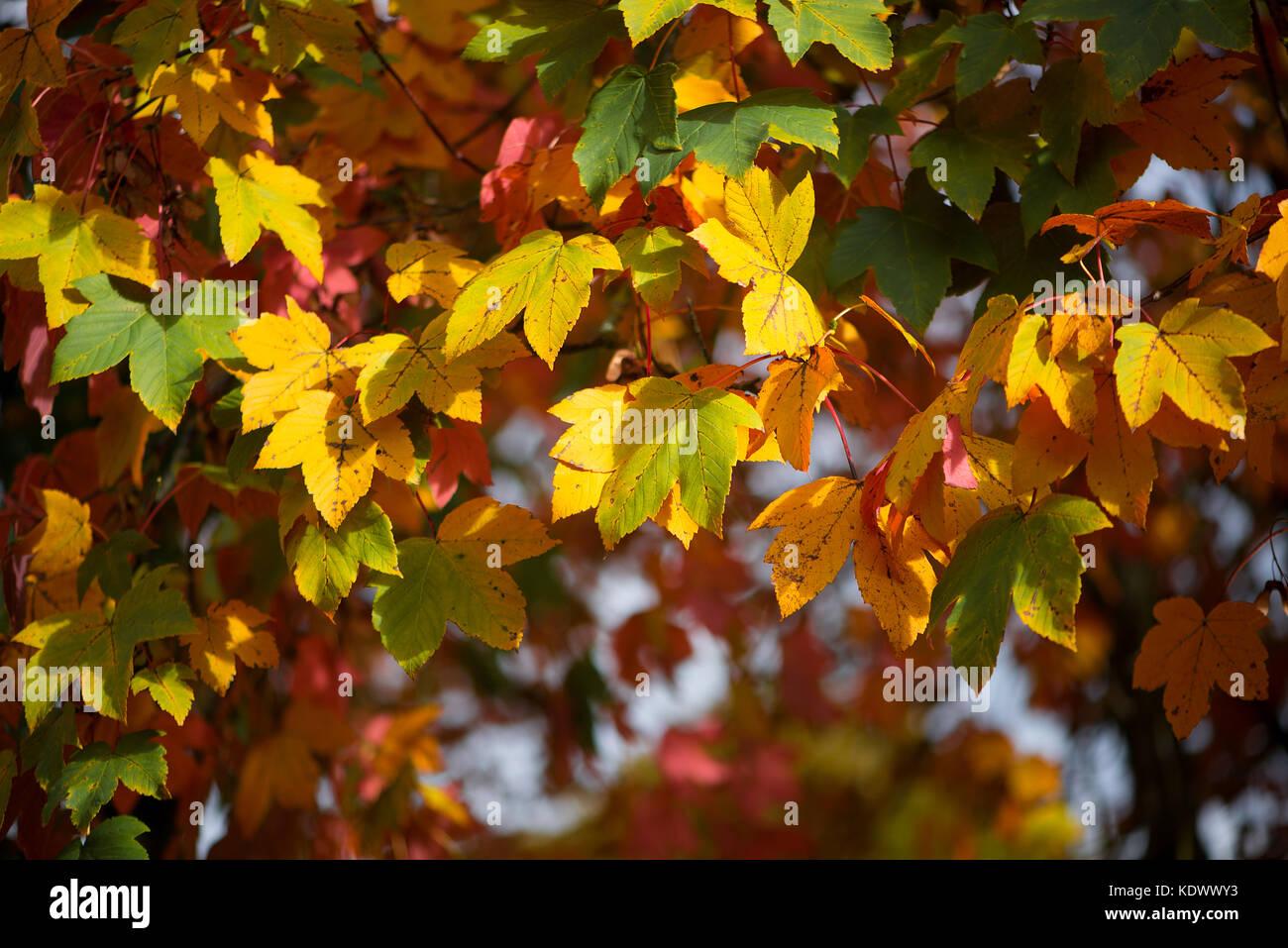 Beautiful Fall Season - Stock Image