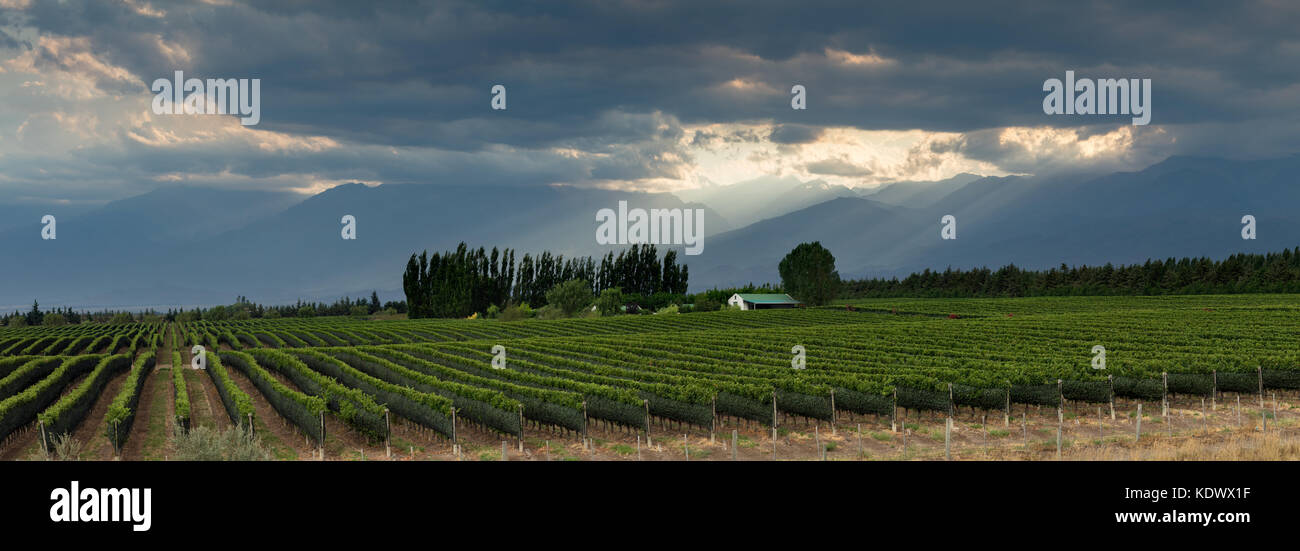 The Andes from the vineyards of the Uco Valley nr Tupungato, Mendoza Province, Argentina - Stock Image