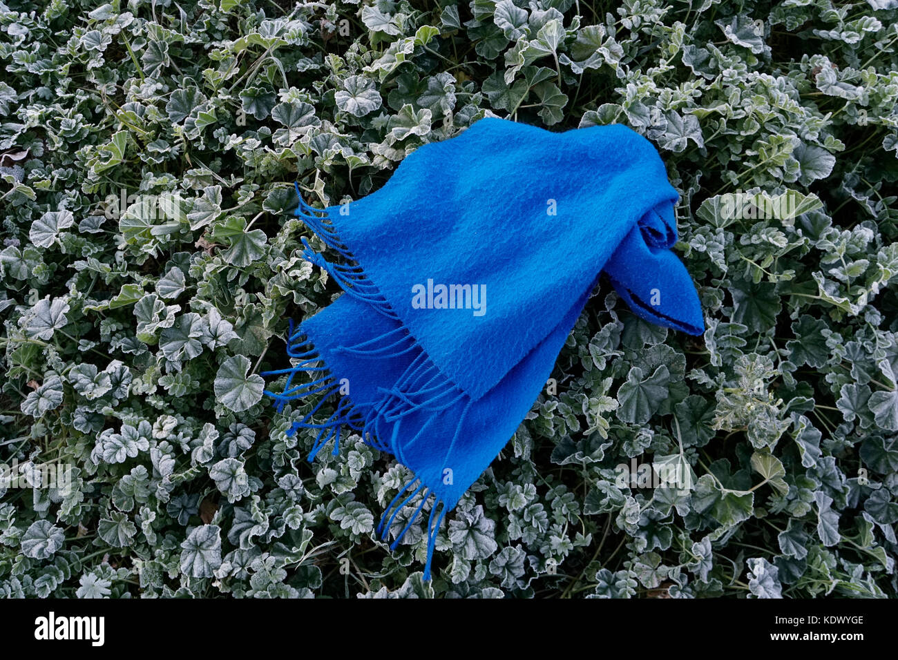 Winter time. Blue scarf falling on icy grasses by the frost of the night. Portugal - Stock Image