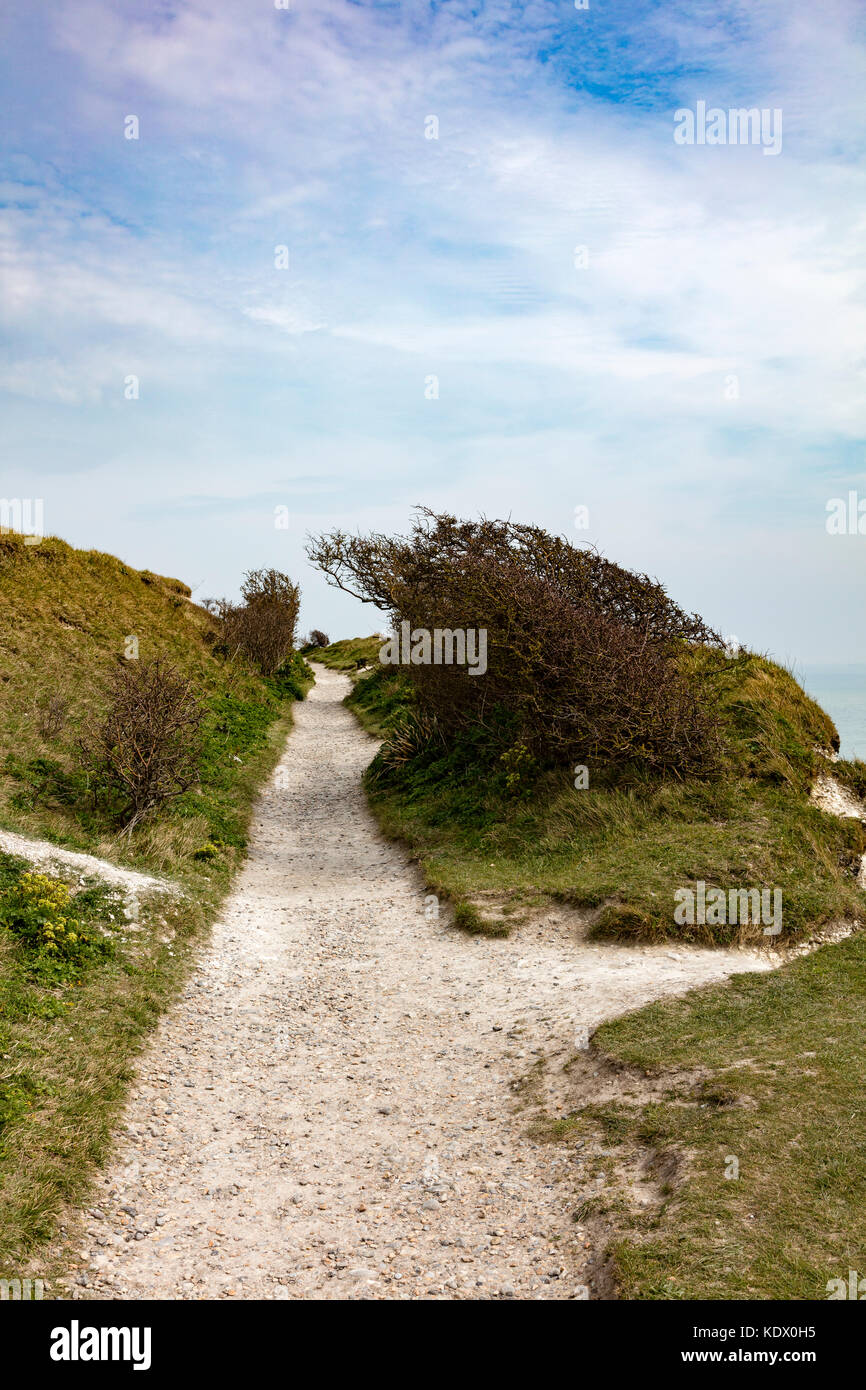 Chalk pathway on top of the Cliffs at Dover, a wind swept bush bends from the prevailing winds, Kent, UK - Stock Image