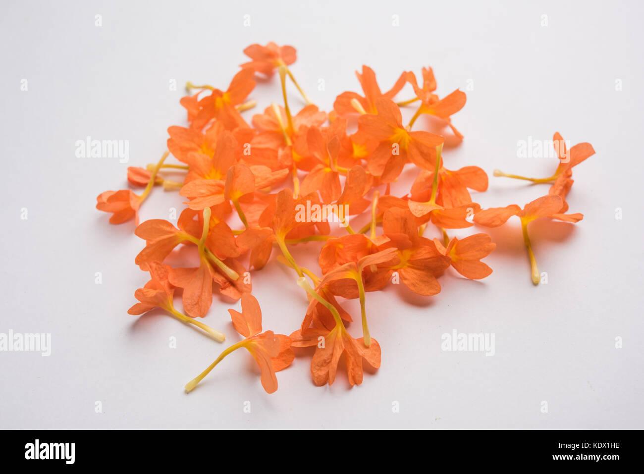 aboli flower