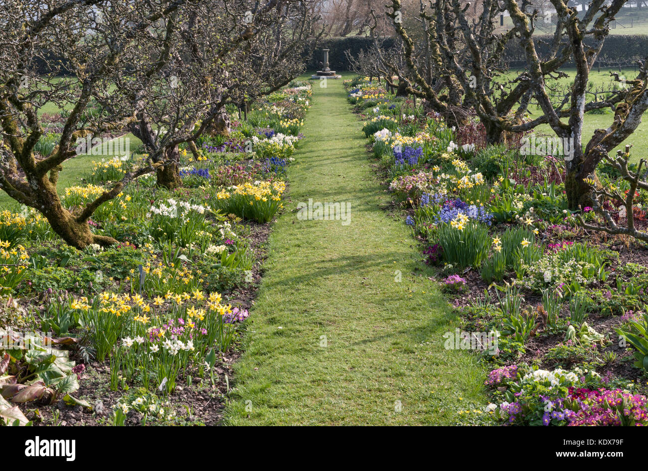 Hergest Croft Gardens, Kington, Herefordshire, UK. Spring borders with old apple trees - Stock Image