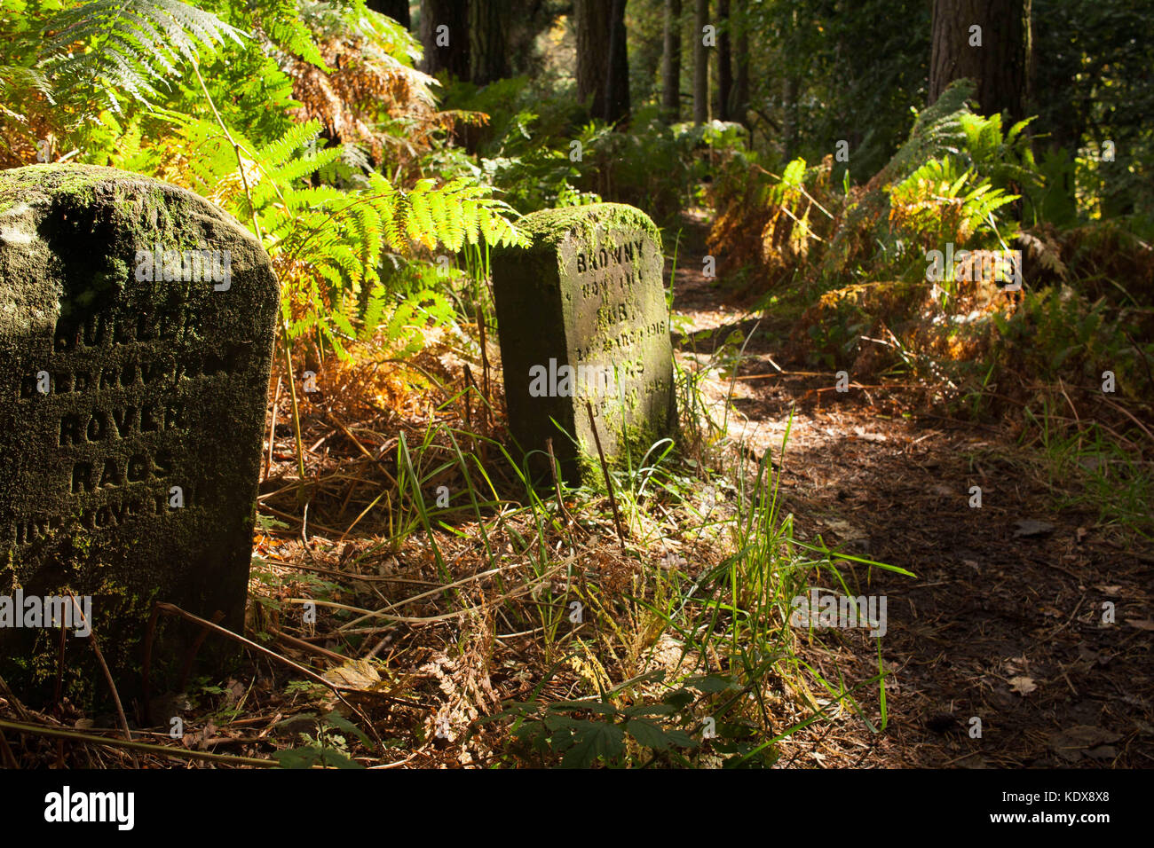 pets cematery, Colzium estate, Kilsyth, Scotland - Stock Image