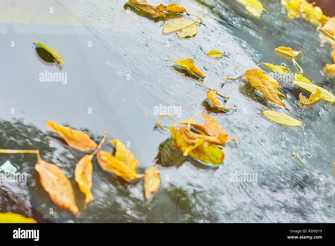View of the colors of autumn, leaves through the window glass covered by raindrops - Stock Image