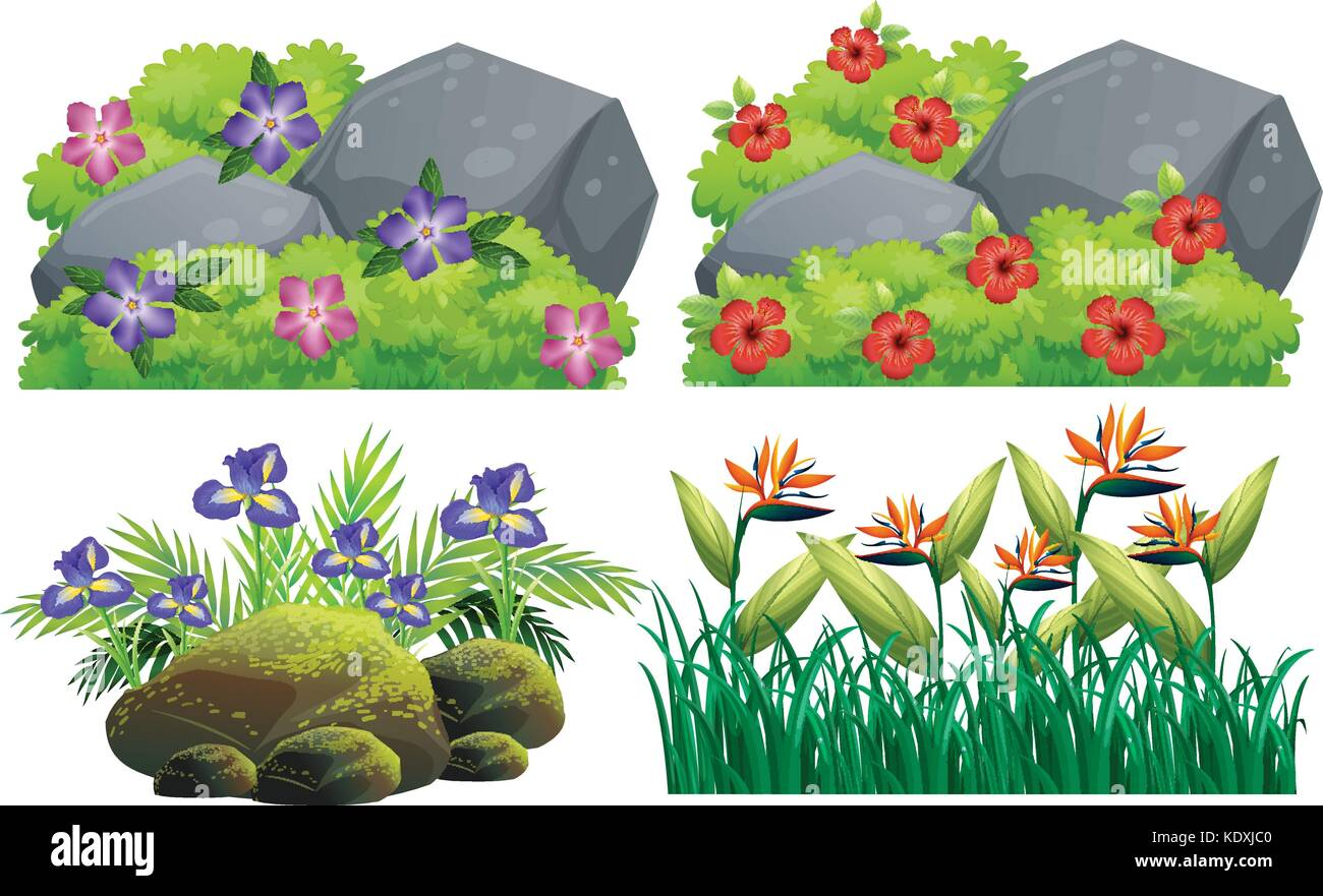 Different Types Of Flowers In Bush Illustration Stock Vector Image Art Alamy