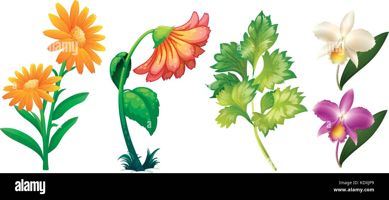 Different Types Of Flowers And Leaves Illustration Stock Vector Image Art Alamy