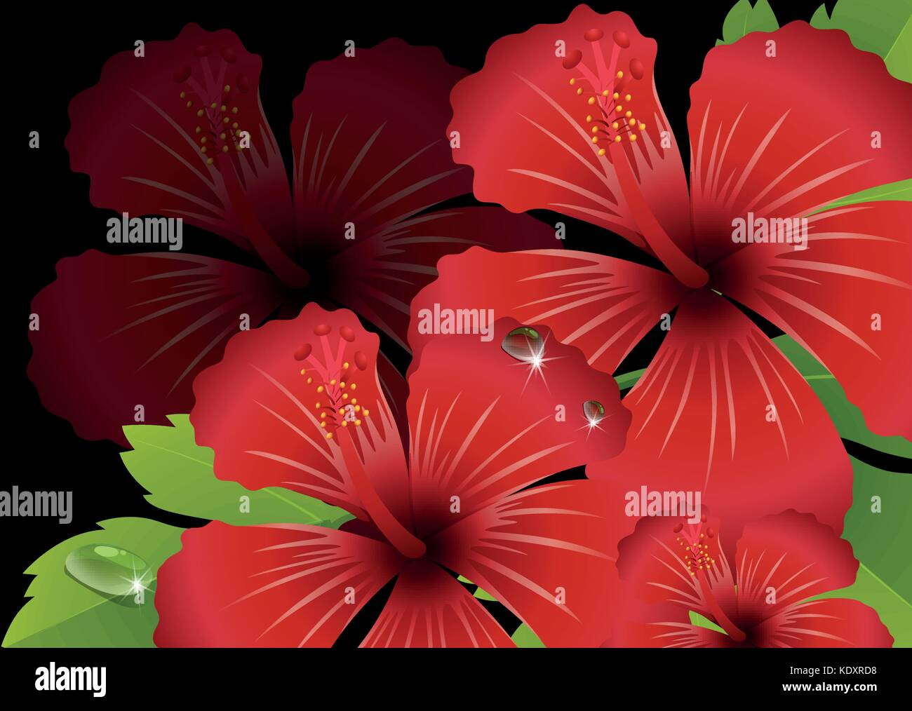 Hibiscus flowers stock vector images alamy red hibiscus flowers with black background illustration stock vector izmirmasajfo