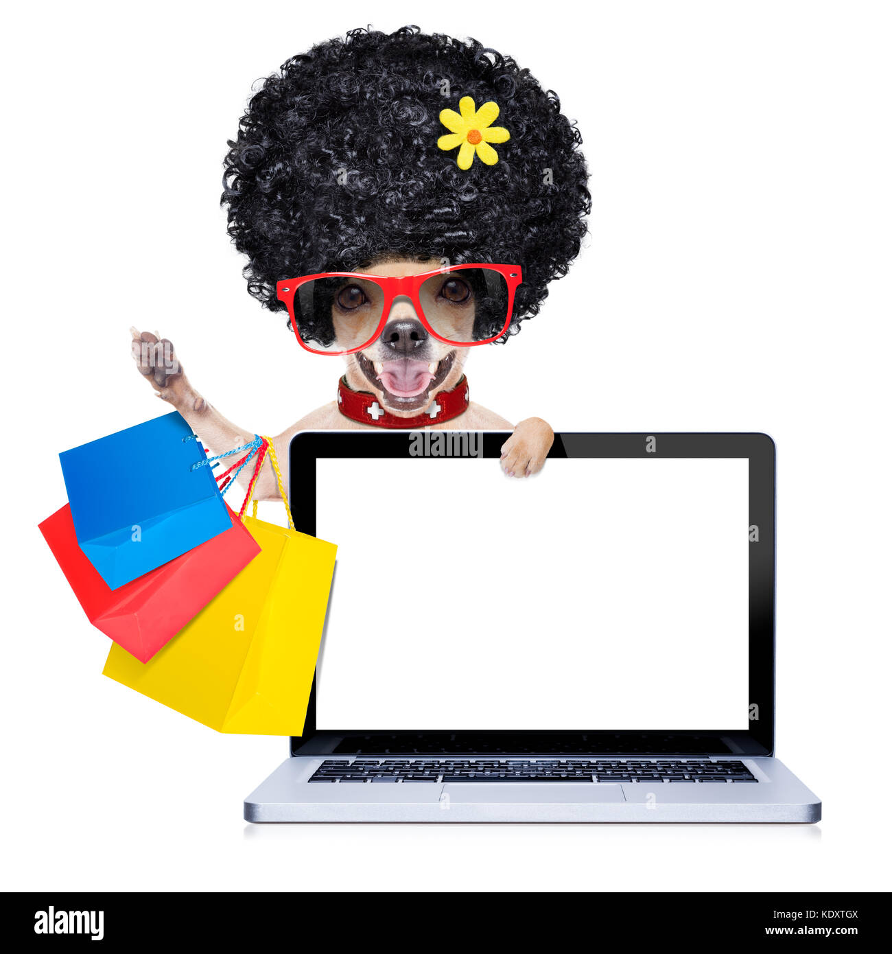chihuahua dog with shopping bags behind laptop pc computer screen or