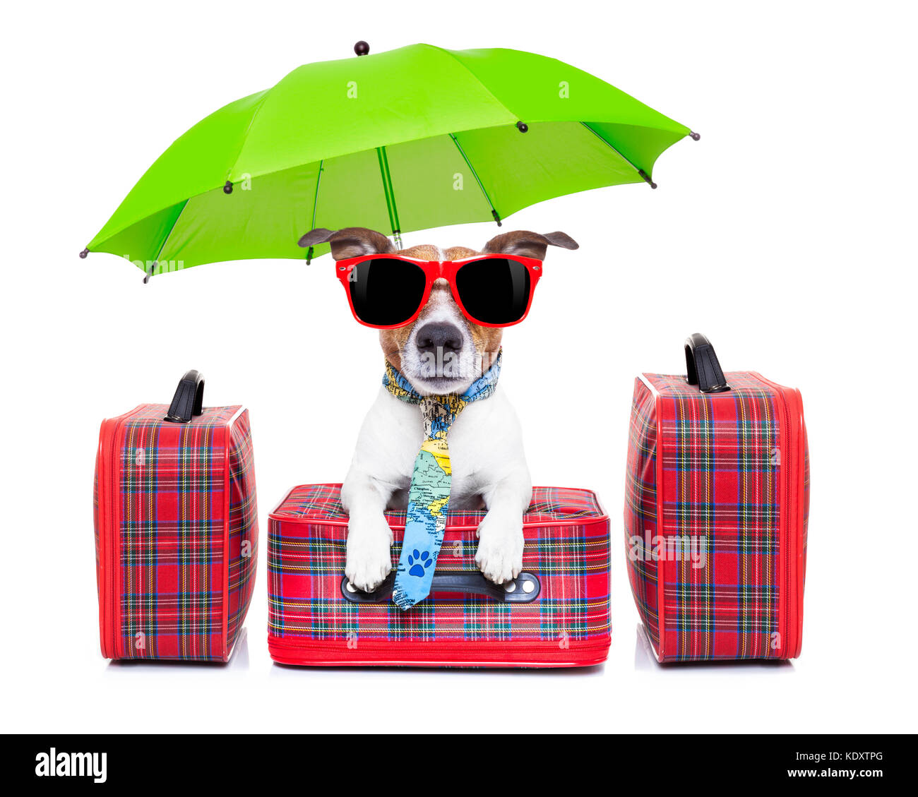 dog with luggage ready to go on summer holidays or vacation with umbrella and sunglasses - Stock Image