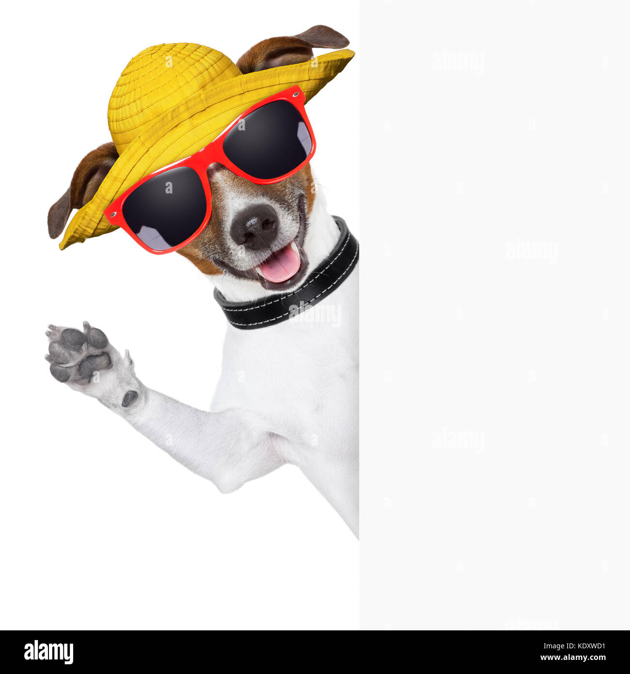 funny summer dog behind a blank banner - Stock Image