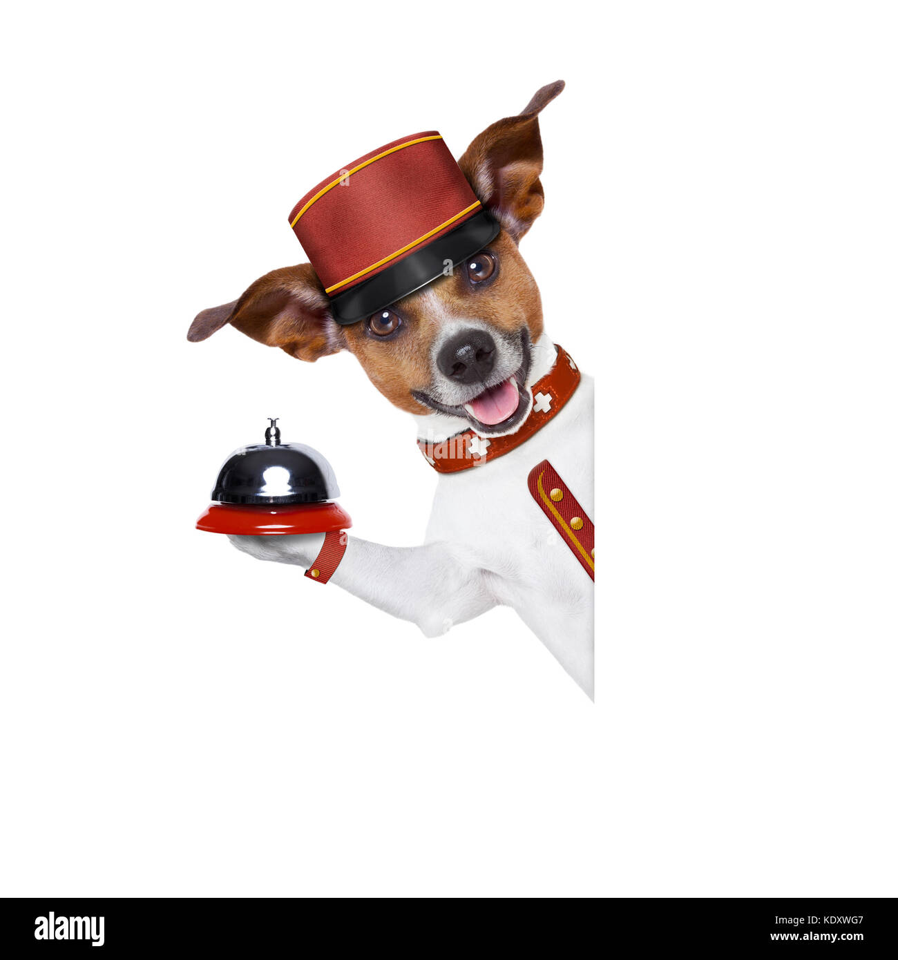 jack russell bellboy dog behind a blank and empty banner or placard at hotel, where pets are welcome and allowed,isolated - Stock Image