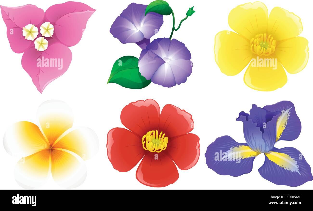 Different Types Of Flowers On White Illustration Stock Vector Art