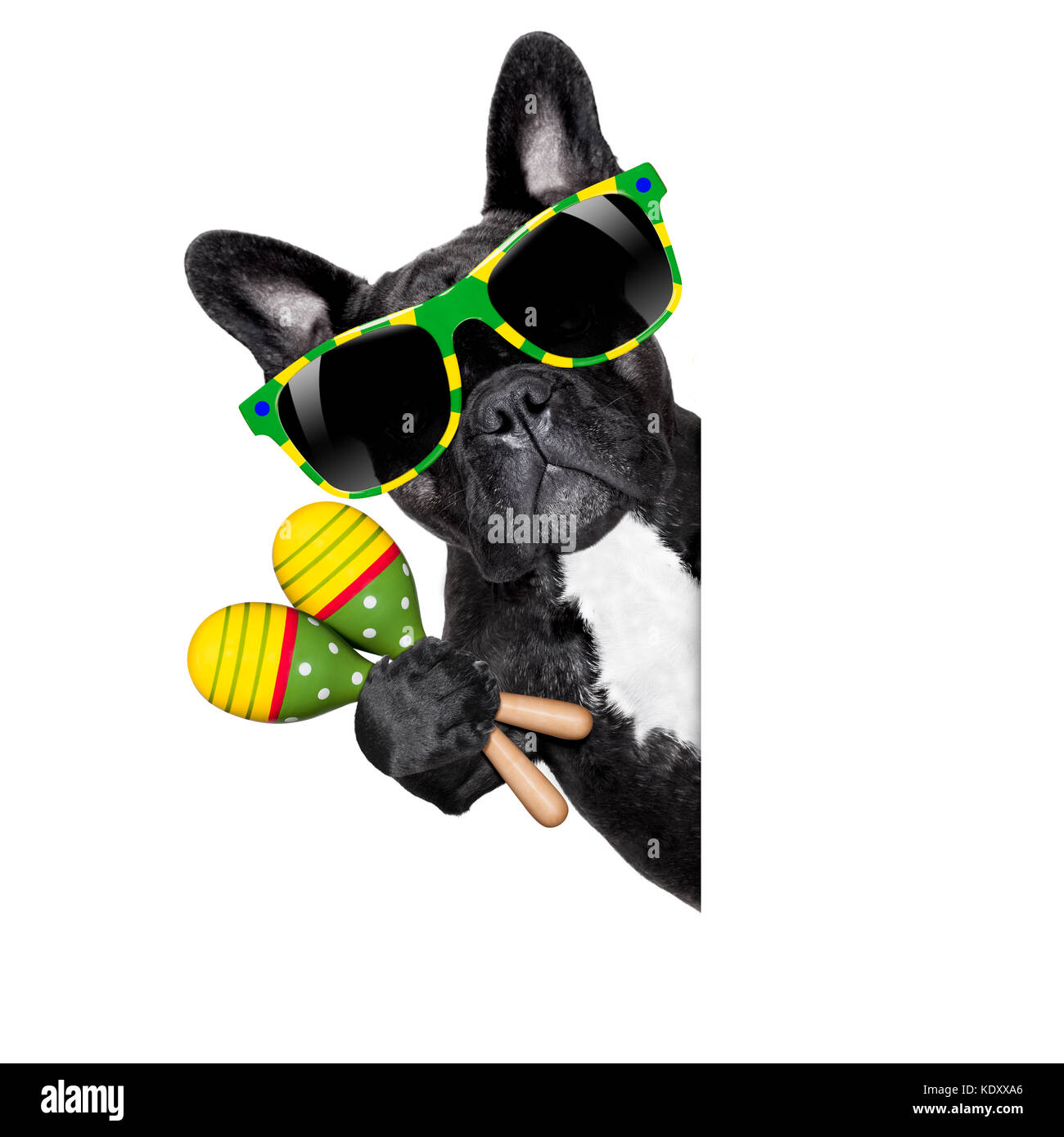 brazil french bulldog dog enjoying summer vacation holidays, behind  blank empty banner or placard, isolated on - Stock Image