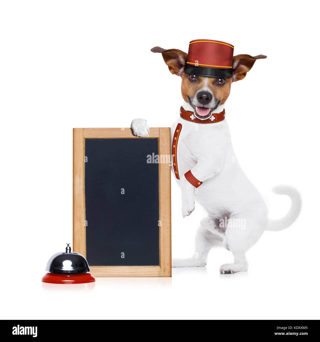 jack russell bellboy dog holding a blank and empty blackboard at hotel, where pets are welcome and allowed,isolated - Stock Image