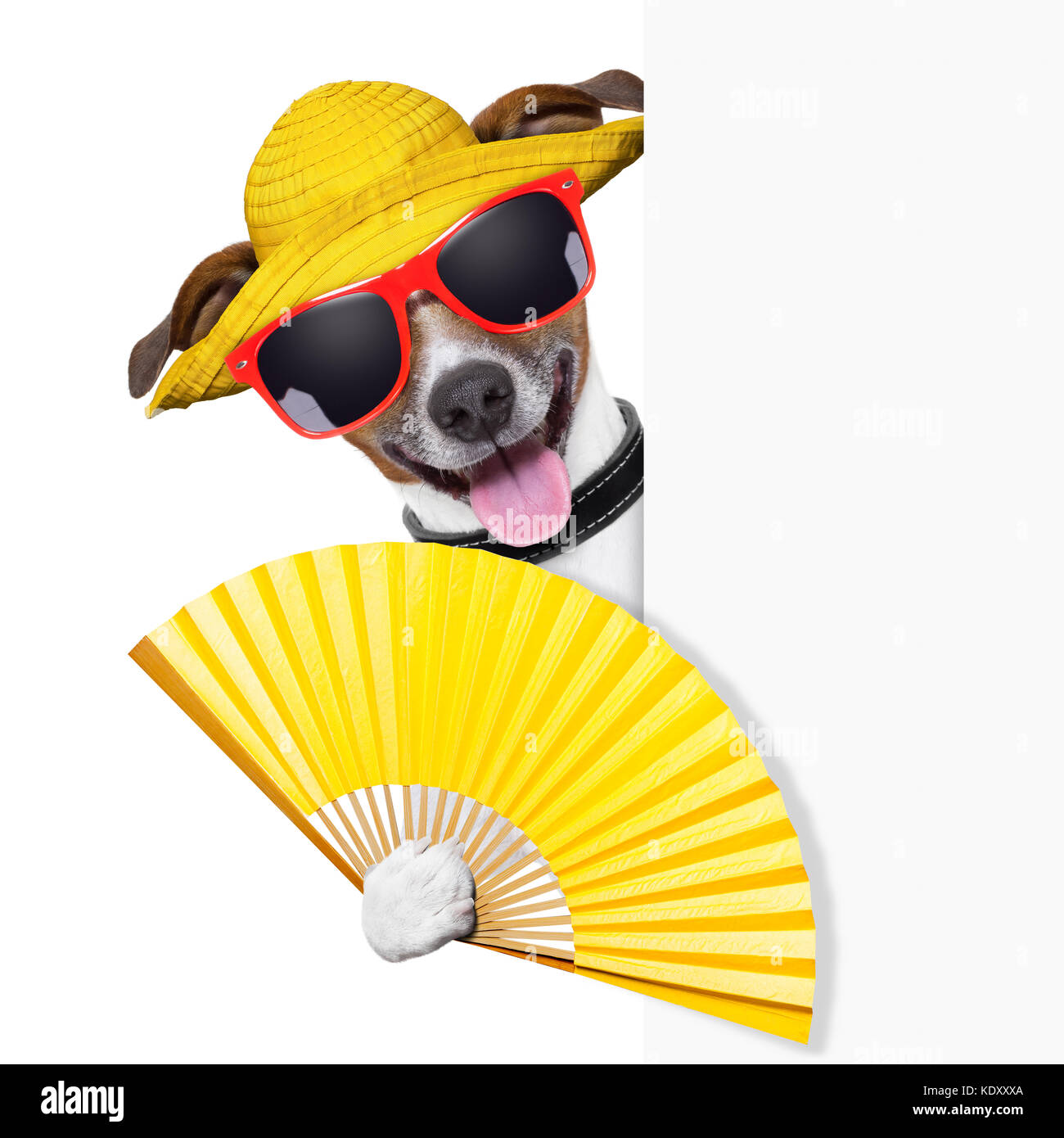 summer cocktail dog cooling of with hand fan behind banner - Stock Image
