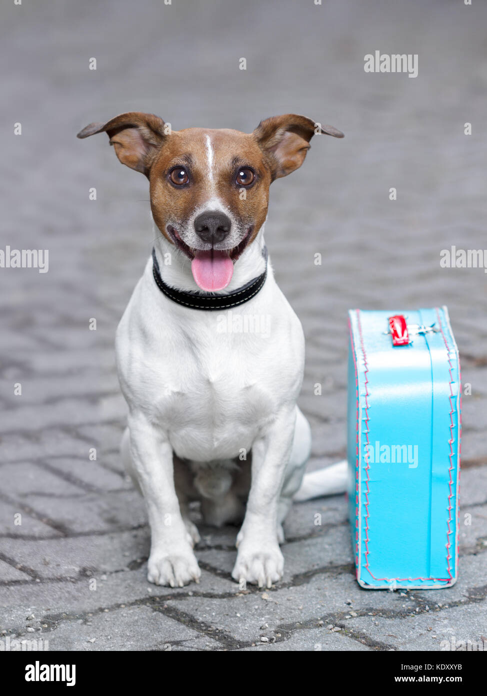 vacation dog waiting outside ready to depart with luggage - Stock Image