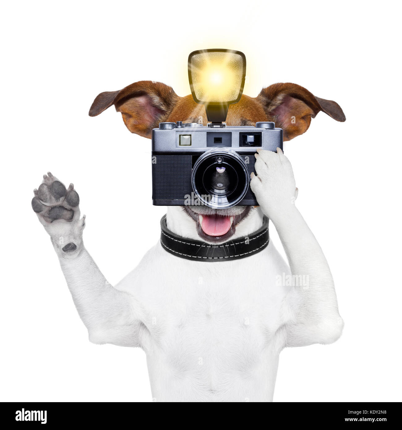 dog taking a photo with an old camera and flashgun - Stock Image